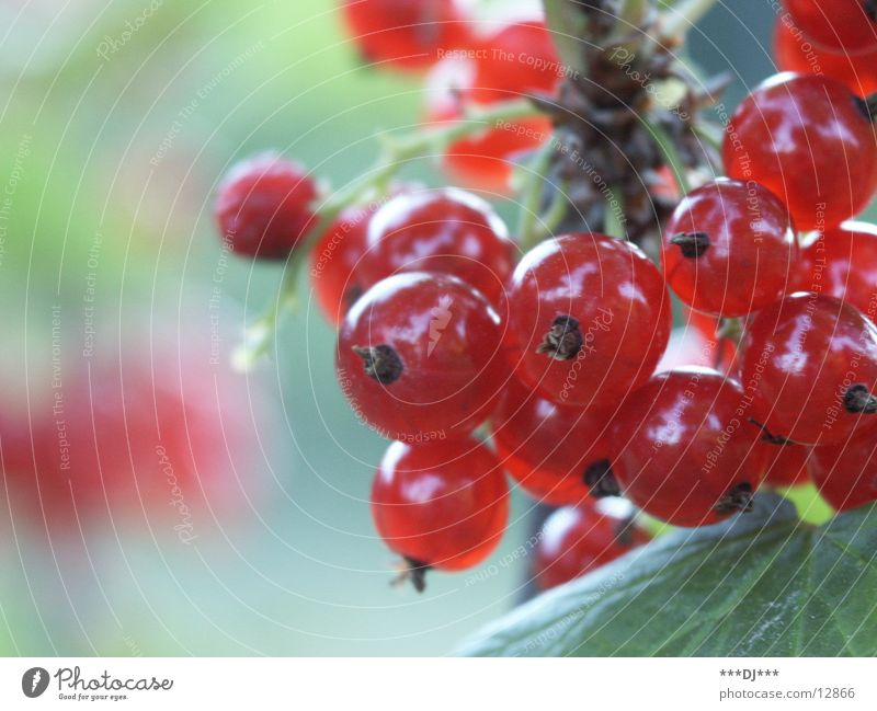 Red Fruit Delicious Berries Holiday season Fruity