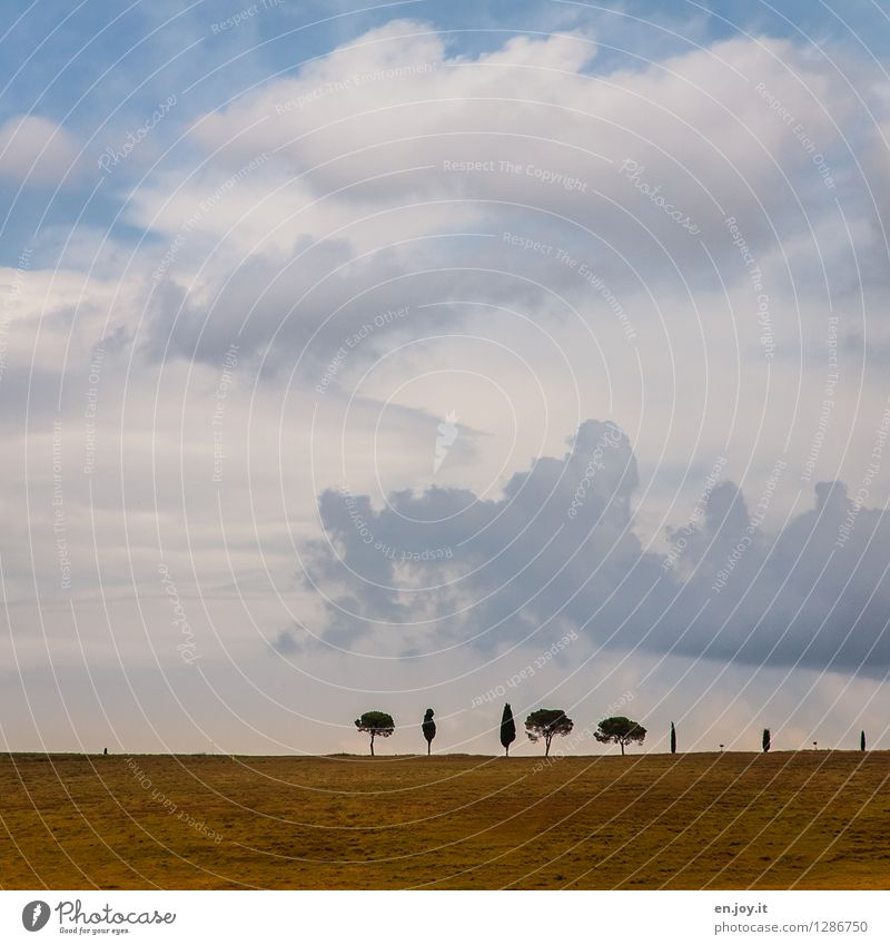 Sky Nature Vacation & Travel Plant Summer Tree Landscape Clouds Far-off places Autumn Meadow Horizon Field Arrangement Trip Climate