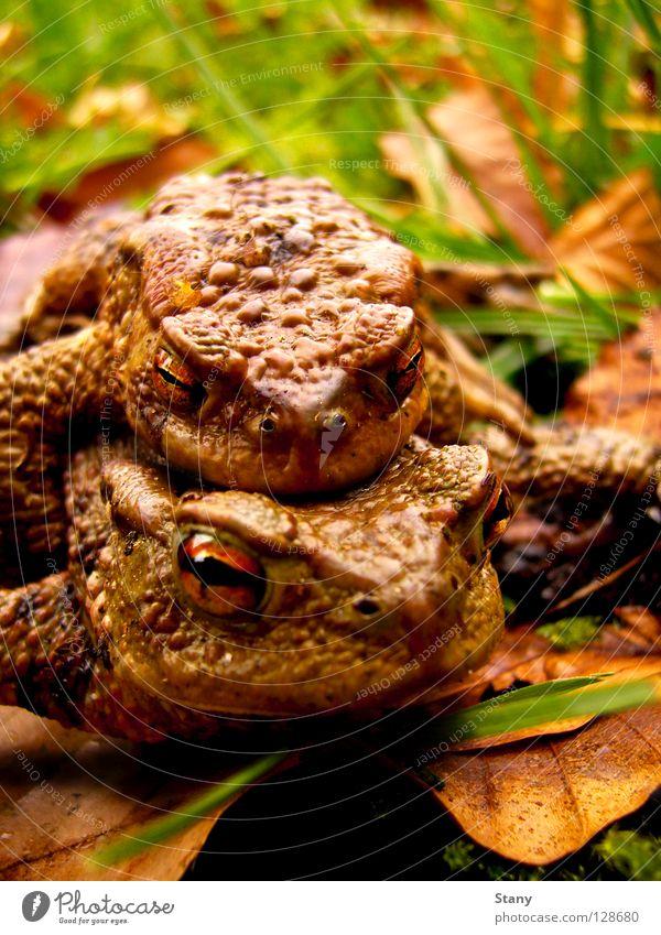 Leaf Grass Rain Wet Effort Carrying Painted frog Toad migration