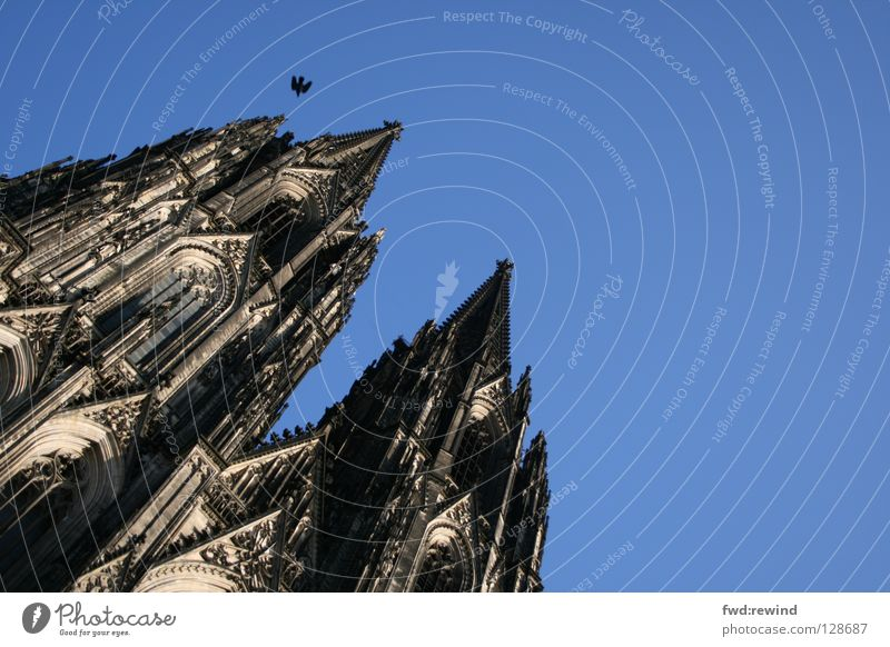 sky is the limit Dome Cologne Bird Blue Cologne Cathedral Flying Hope Religion and faith House of worship cathedral Architecture