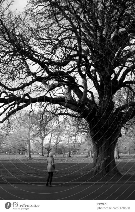girl and tree Tree Woman Park Winter Small Branchage Stay Black & white photo To go for a walk Life Calm Old Twig Tree trunk Marvel Nature