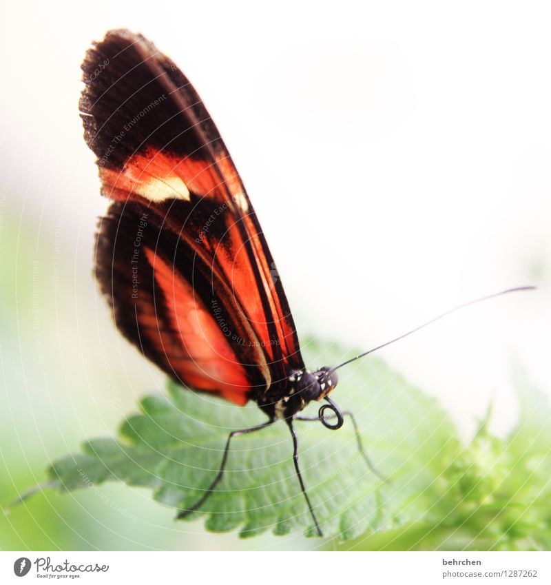 horny Nature Plant Animal Tree Bushes Leaf Garden Park Meadow Wild animal Butterfly Animal face Wing Trunk Feeler Legs Compound eye 1 Observe Relaxation Flying