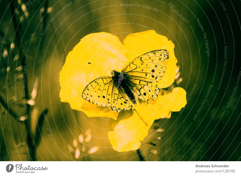 Green Butterfly Yellow Dream Harmonious Home country Colour Nature