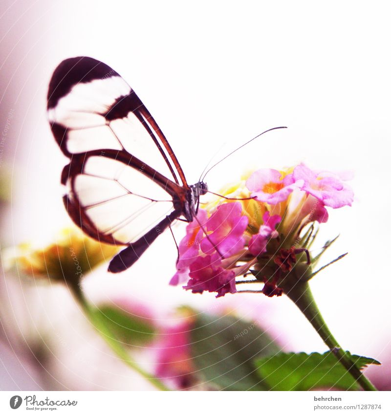 Nature Plant Beautiful Summer Flower Relaxation Leaf Animal Blossom Spring Meadow Small Garden Exceptional Flying Pink