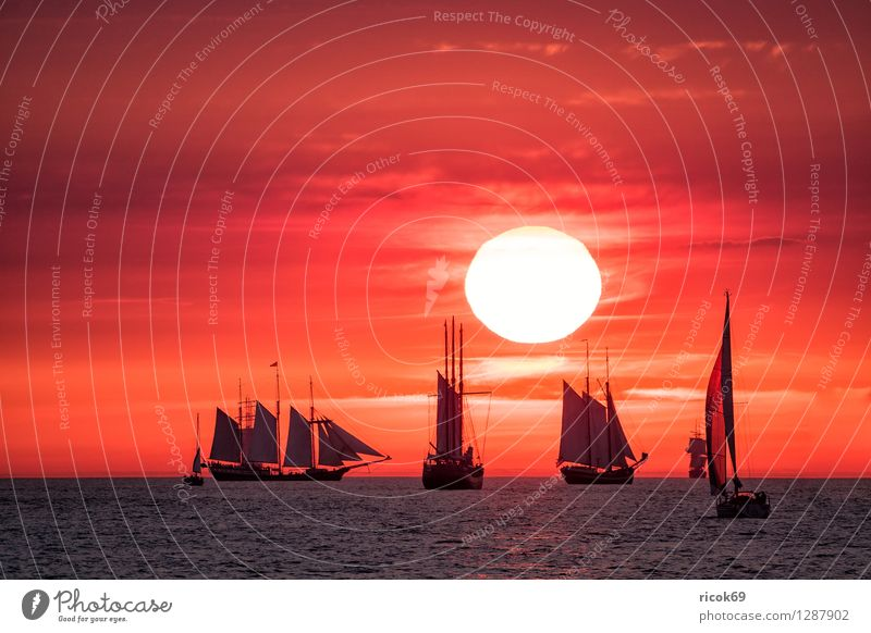 Sailing ships on the Hansesail Relaxation Vacation & Travel Tourism Sun Water Clouds Baltic Sea Navigation Maritime Yellow Red Romance Idyll Kitsch Tradition