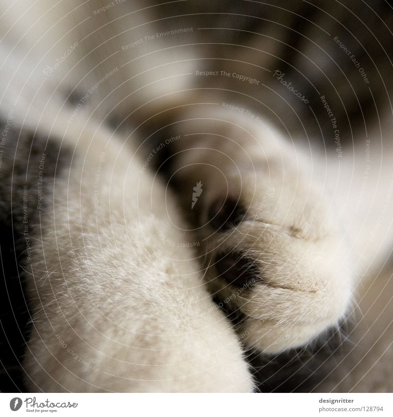 Slept late? Cat Pelt Soft Cuddly Paw Sleep Calm Oversleep Cozy Mammal Warmth Fatigue Contentment Cat's paw Close-up Detail Cute Shallow depth of field