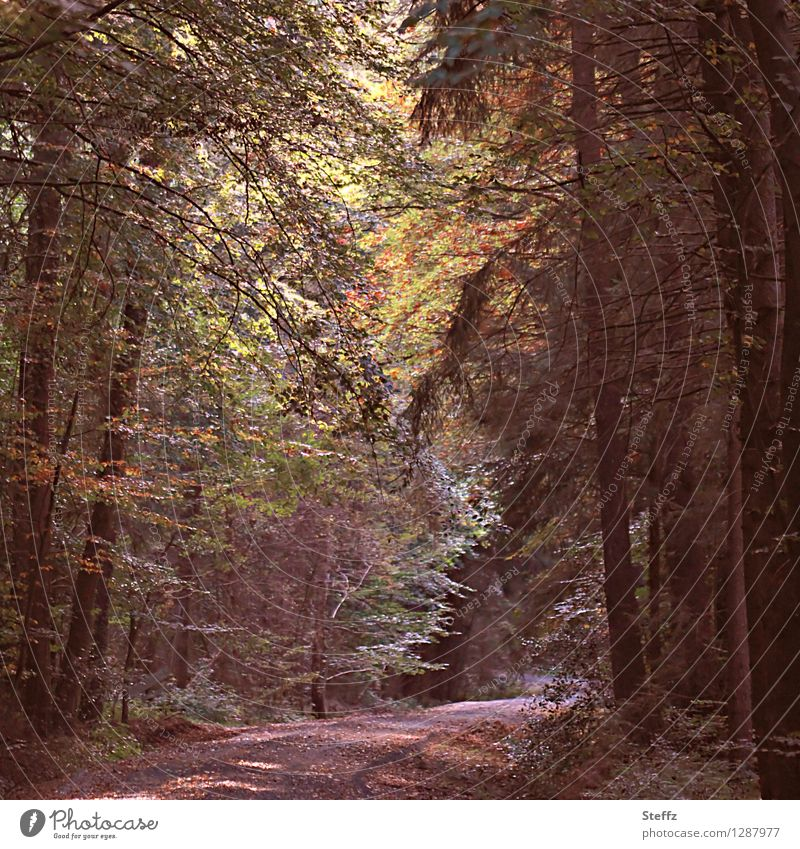 beginning of autumn Light in the forest forest bath Forest atmosphere Automn wood silent tranquillity Silence in the forest calm atmosphere