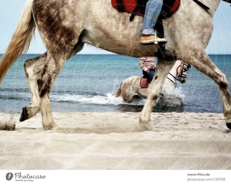 beach rider Beach Horse Ocean Spain Vacation & Travel Animal Summer Horse's gait Sea water Majorca Alcudia Equestrian sports Mammal Transport Water spore Sute