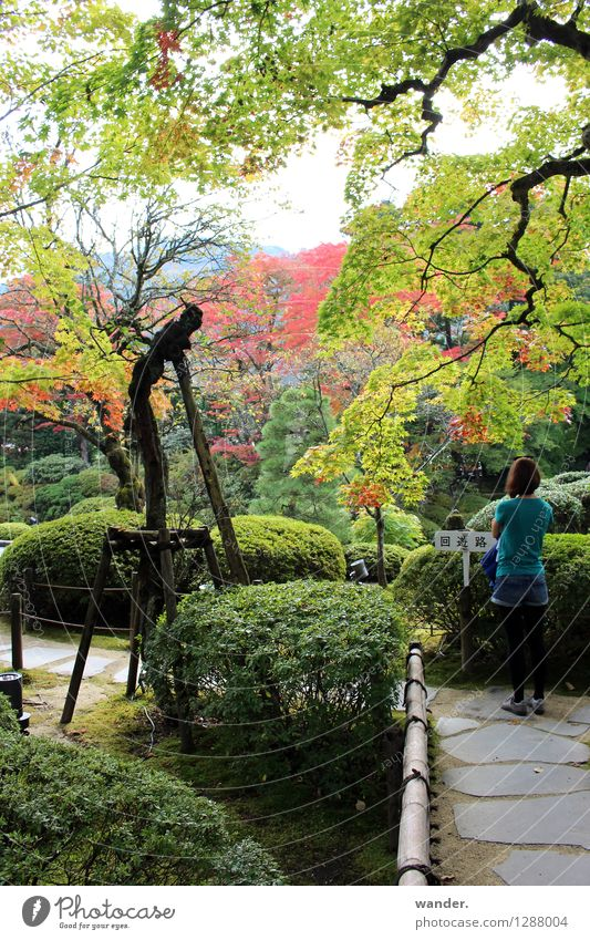 Japanese Zen garden in autumn, Nikko Vacation & Travel Tourism Trip Far-off places Sightseeing City trip Human being Feminine Young woman Youth (Young adults) 1