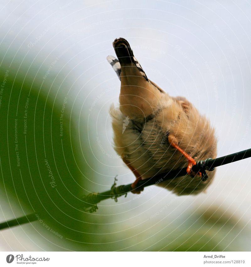 bottom Bird Rod Feather Rear view Leaf Blur Spring Hind quarters Sit Backwards Wait