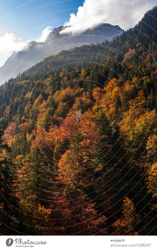 Gülden Vacation & Travel Trip Mountain Environment Nature Landscape Plant Sky Clouds Sunlight Autumn Beautiful weather Forest Alps Peak Faded Yellow Calm