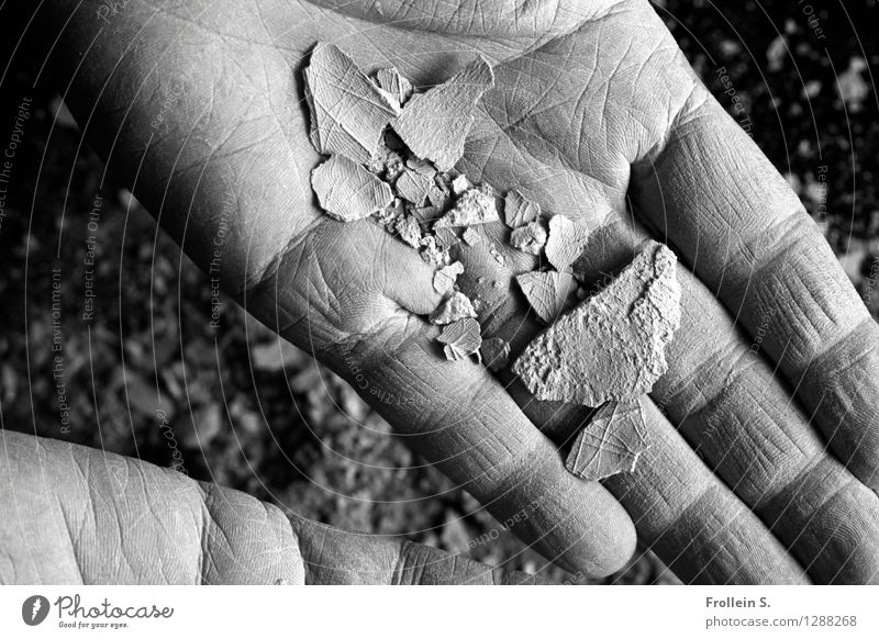 Palm reading 2 Fingers Hand Wrinkle Skin Line Net Network Shard Clay Crumbs Dust Touch Esthetic Indicate Undo Breakage Crack & Rip & Tear Double exposure
