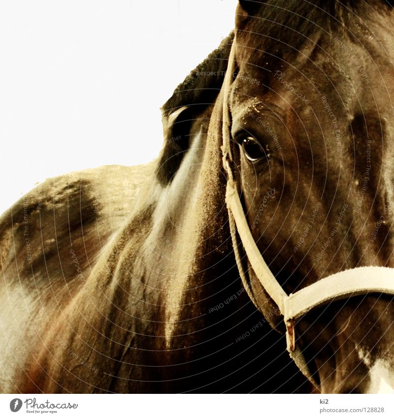 Nature Movement Freedom Sand Earth Horse Concentrate Captured Mammal Dust Animal