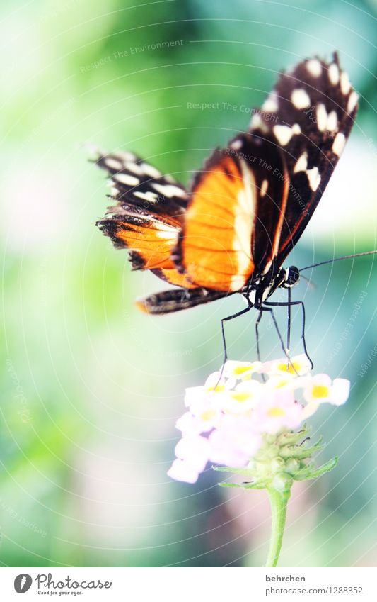 departure Nature Plant Animal Spring Summer Beautiful weather Flower Leaf Blossom Garden Park Meadow Wild animal Butterfly Wing Legs Hind quarters 1 Blossoming