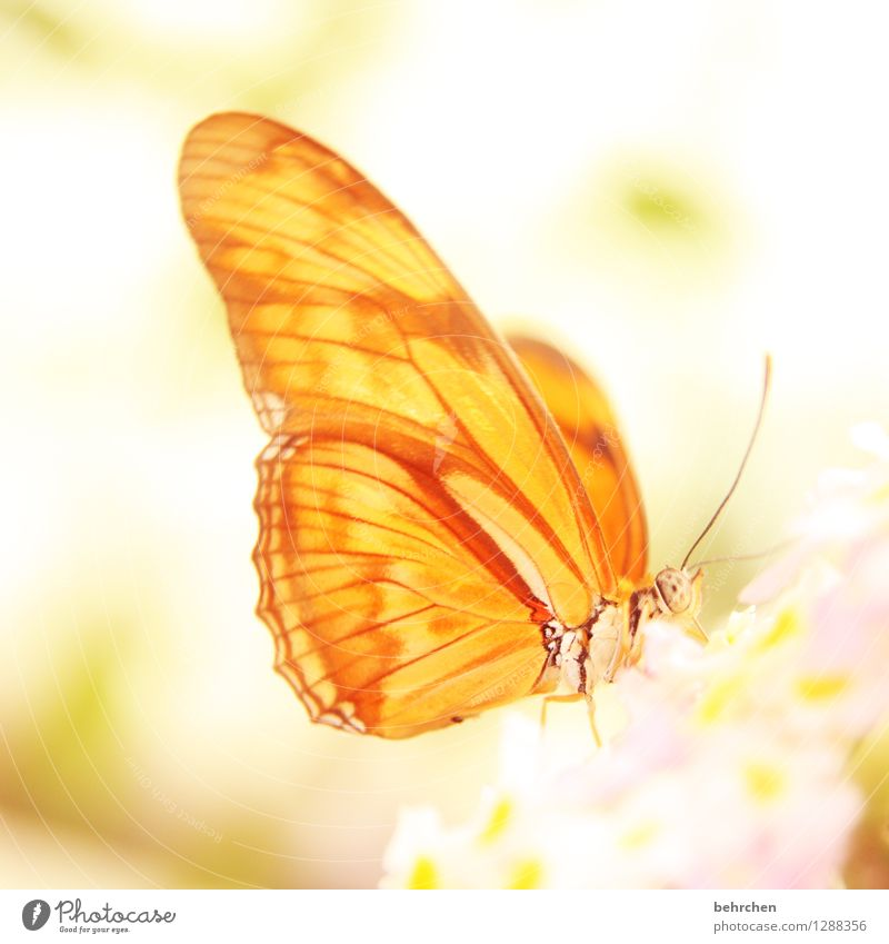 the morning hour has gold in its mouth Nature Plant Animal Spring Summer Beautiful weather Flower Blossom Garden Park Meadow Wild animal Butterfly Animal face
