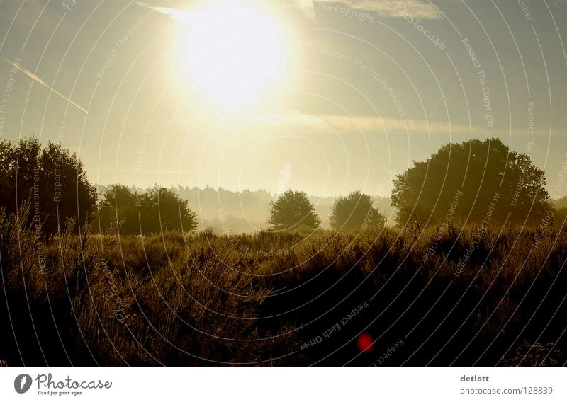 Nature Sky Sun Green Vacation & Travel Autumn Landscape Brown Hiking Fog Earth To go for a walk Cologne