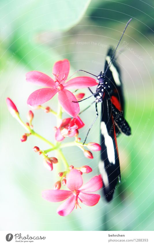 hang out Nature Plant Animal Beautiful weather Flower Leaf Blossom Garden Park Meadow Wild animal Butterfly Animal face Wing Compound eye Feeler Legs