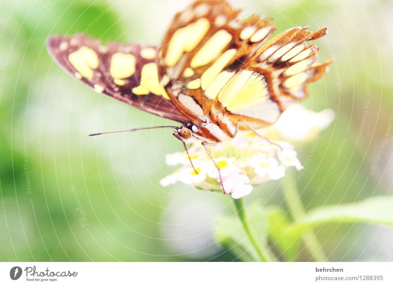 THE LIGHTNESS OF BEING Nature Plant Animal Flower Leaf Blossom Garden Park Meadow Wild animal Butterfly Animal face Wing Trunk Feeler 1 Observe Blossoming