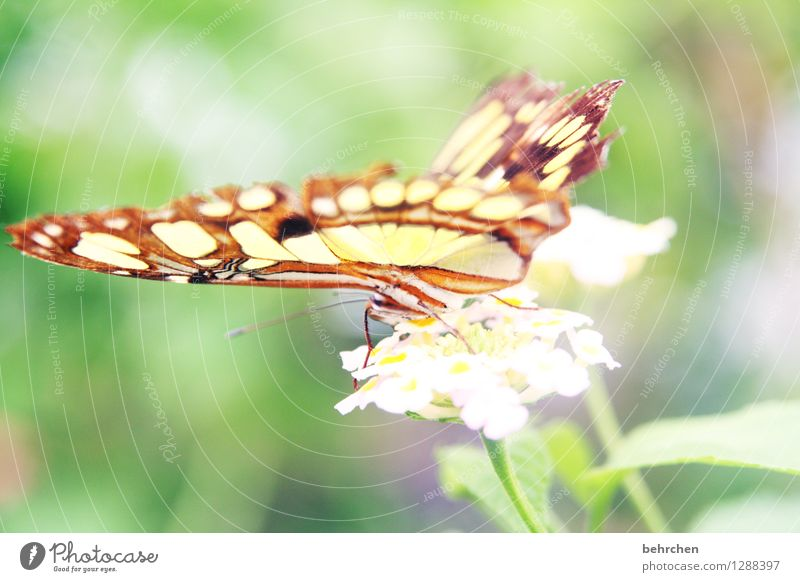 Delicate Nature Plant Animal Spring Summer Flower Leaf Blossom Garden Park Meadow Wild animal Butterfly Wing malachite butterfly 1 Observe Relaxation Flying