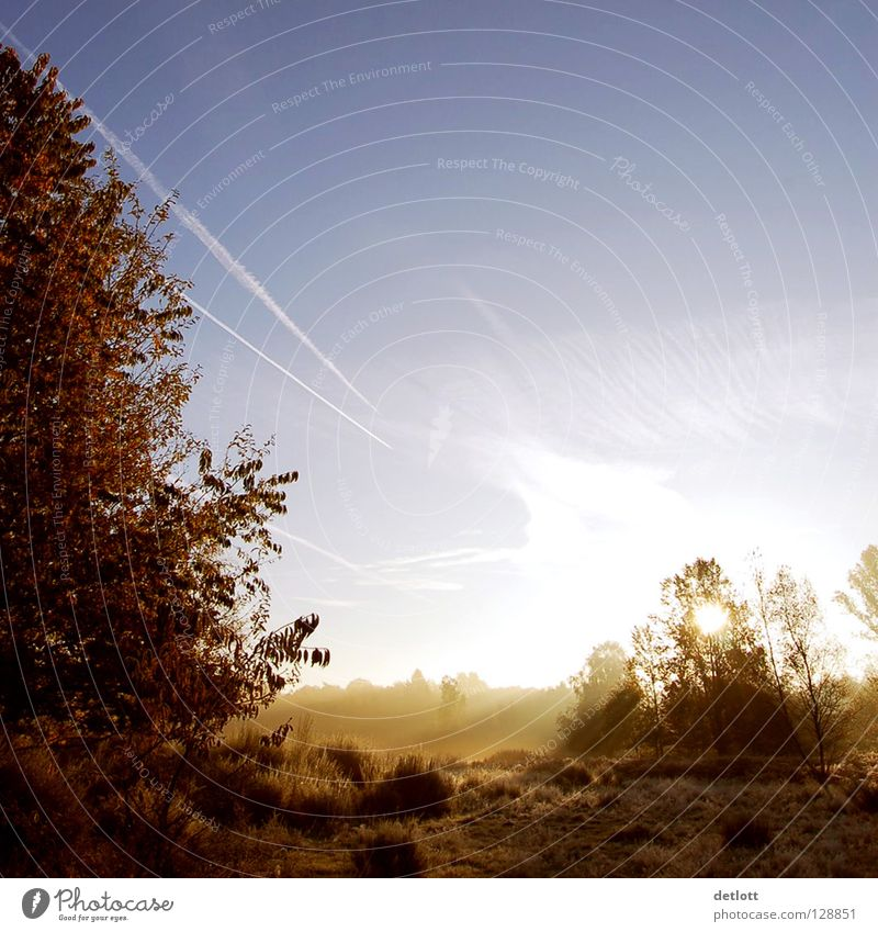 Wahner Heide 20 Sunrise Morning Brown Green Light Clouds Fog Autumn Landscape To go for a walk Nature Shadow Blue