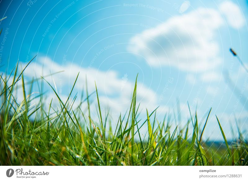 On the meadow Healthy Vacation & Travel Sun Sports Environment Nature Landscape Plant Elements Sky Clouds Climate Weather Beautiful weather Grass Bushes