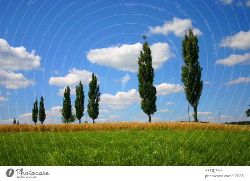 summer feeling Tree Clouds Grass Field Ear of corn Green Summer Calm Vacation & Travel Nature Sky Lawn Blue Sun