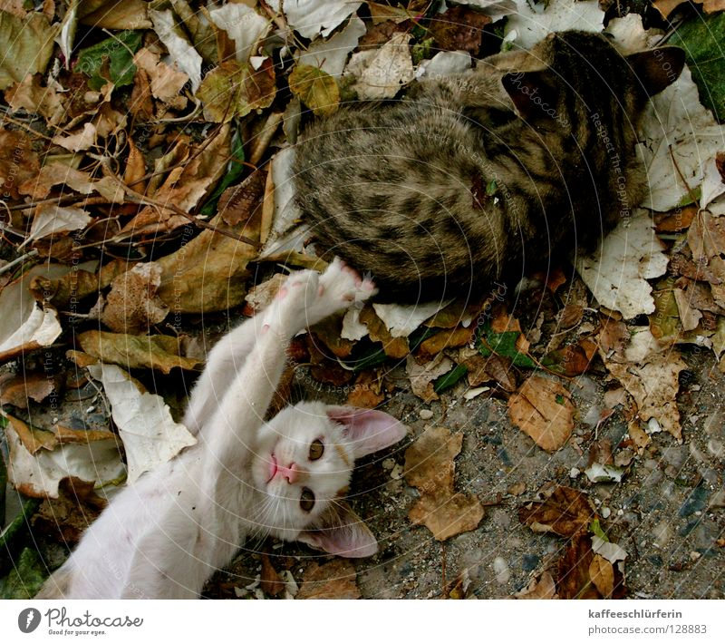 Leaf Animal Cat Mammal Paw Brash Kitten Annoy
