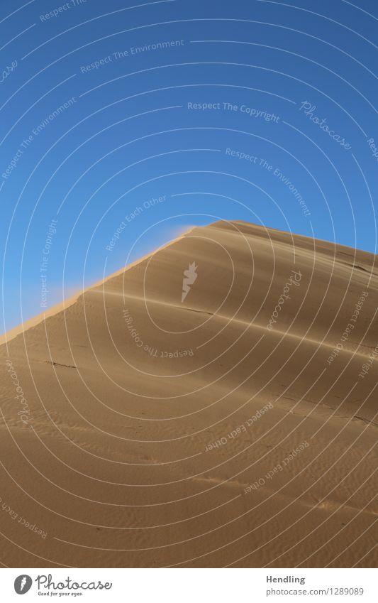 Sahara dust Nature Landscape Elements Sand Sky Cloudless sky Beautiful weather Wind Warmth Drought Desert Oasis Hot Dust Grain Dune Blown away Far-off places
