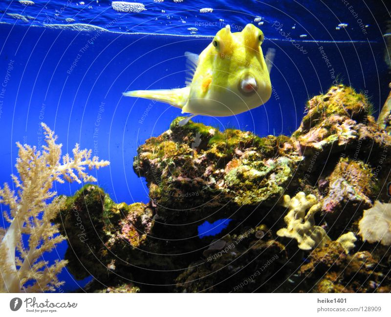 Water Ocean Blue Yellow Colour Lamp Life Fresh Fish Living thing Barn Atlantic Ocean Reef Coral Coral reef