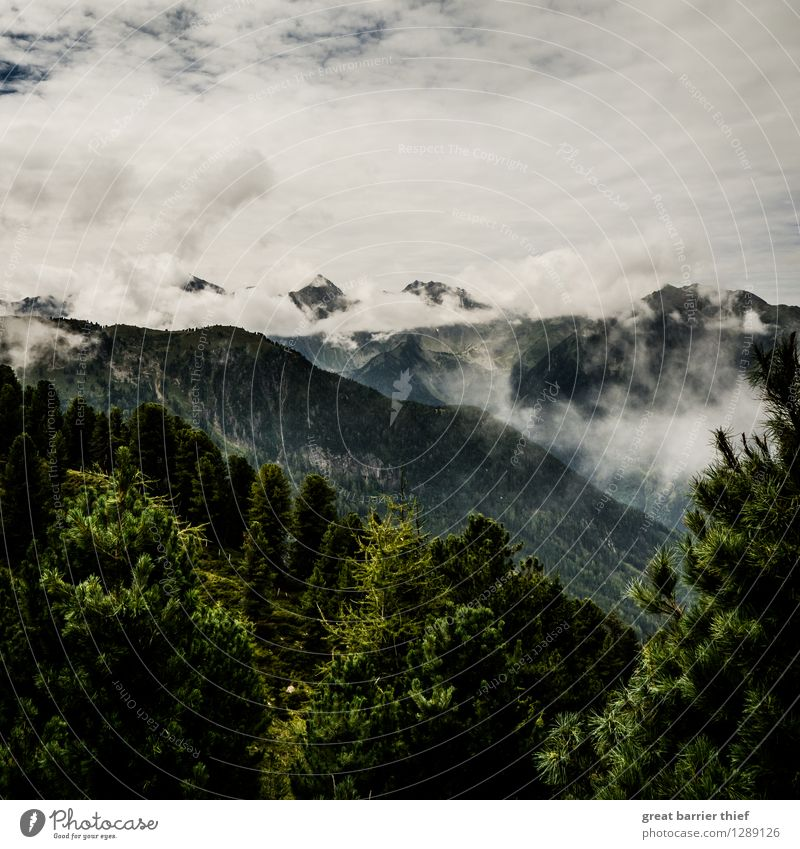 Cloud mountains in the Alps Environment Landscape Animal Sky Clouds Spring Weather Bad weather Plant Tree Peak Hiking Gray Green Silver White Mountain Fir tree