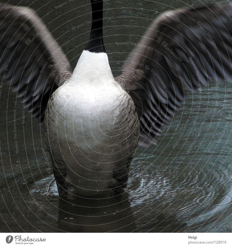 Water White Animal Black Lake Legs Bird Brown Swimming & Bathing Flying Large Stand Feather Wing Long Thin