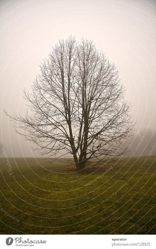 Tree Loneliness Meadow Autumn Fog Branch Branchage