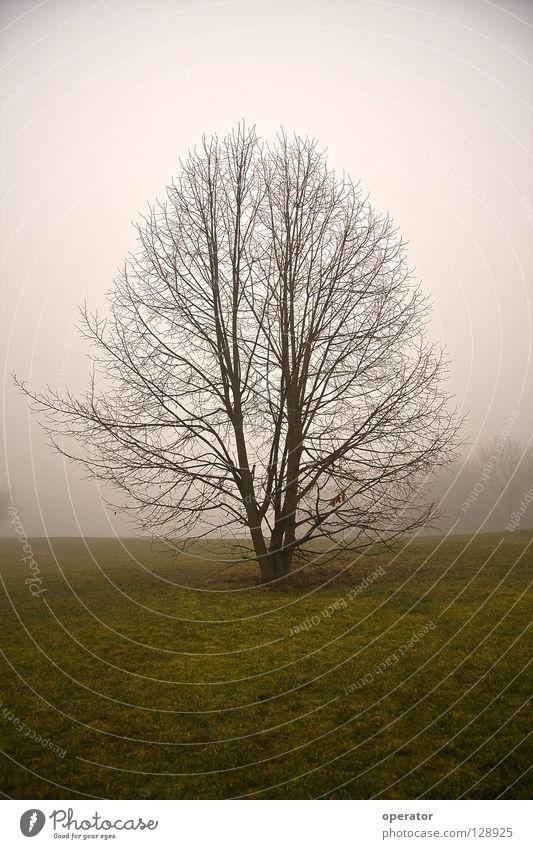 Tree Loneliness Meadow Autumn Fog Branch Branchage