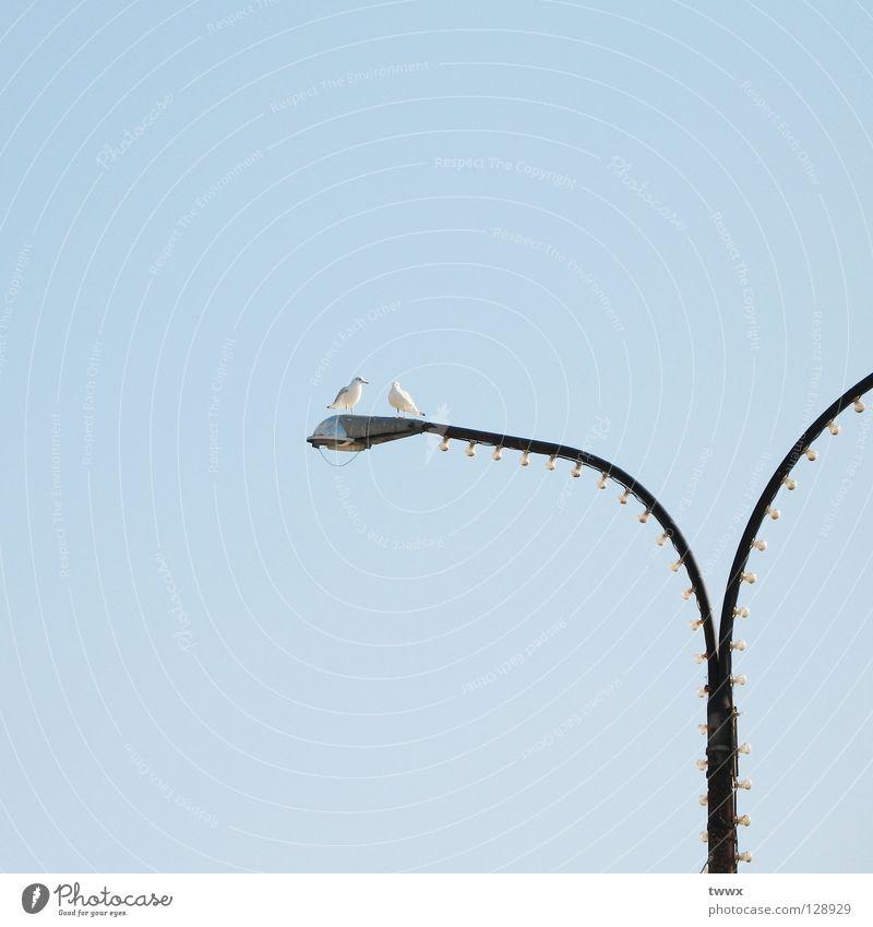 All beginnings: a tête-à-tête... Bird Seagull Lantern Light blue Flirt Lamp Lamp post Street lighting Together Side by side Connectedness Communicate Sky Blue