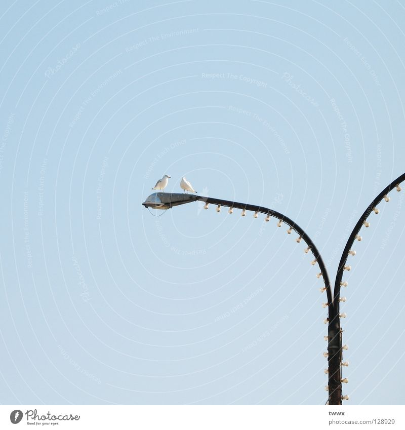 Sky Blue Above Lamp Bird Together Lighting Pair of animals Tall In pairs Communicate Lantern Seagull Street lighting Interest Blue sky