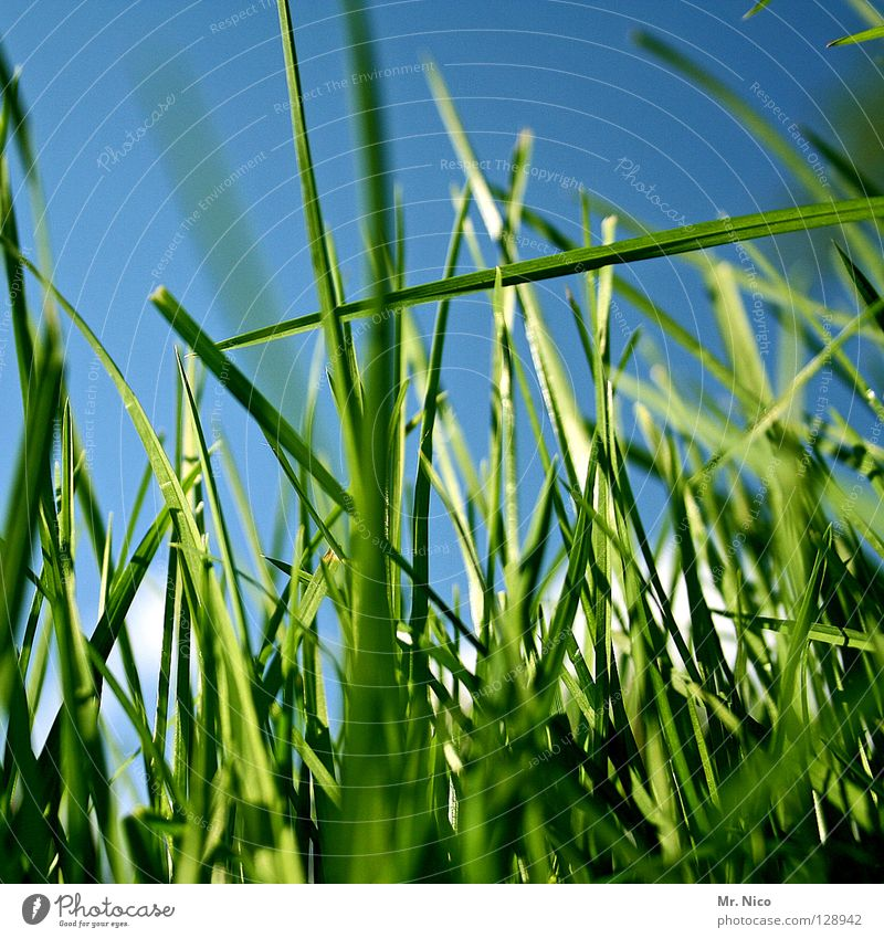 Nature Sky Green Blue Summer Grass Line Crazy Fresh Perspective Clarity Agriculture Pasture Blade of grass Muddled Smoothness