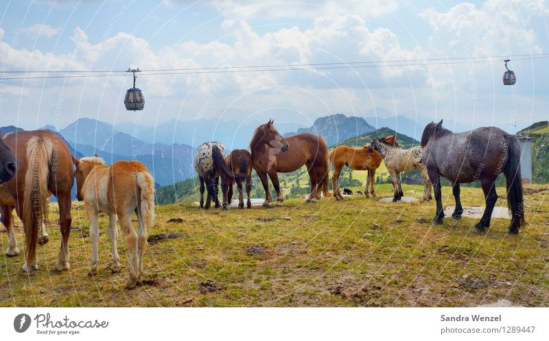 Nature Vacation & Travel Plant Summer Landscape Clouds Animal Mountain Horizon Contentment Weather Hiking Group of animals Beautiful weather Alps Horse