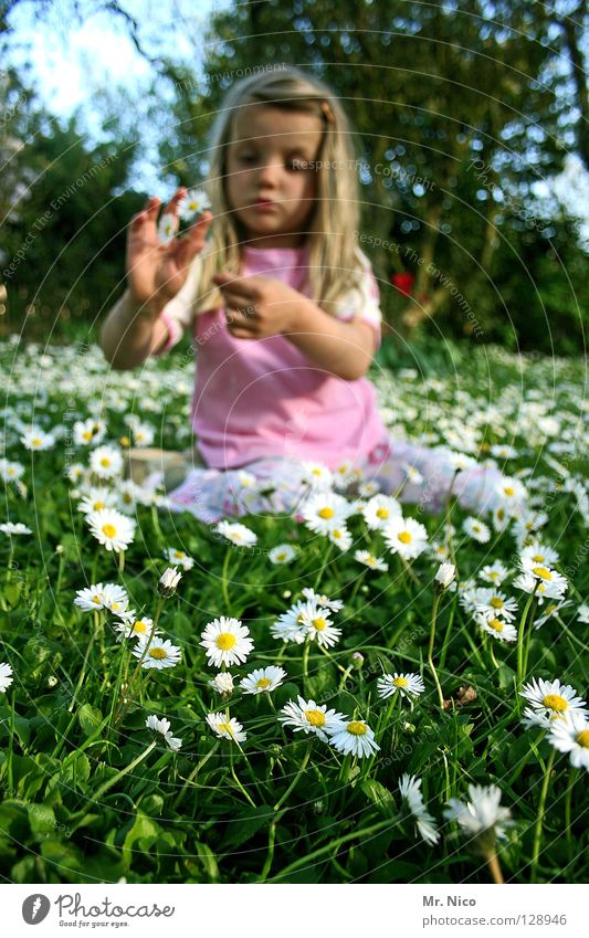 flower girl Daisy Meadow Flower Hippie Girl Long-haired Blonde Beautiful Spring Pink T-shirt Tree Rip Pluck Plucking Fingers Hand Child Joy oracle flower