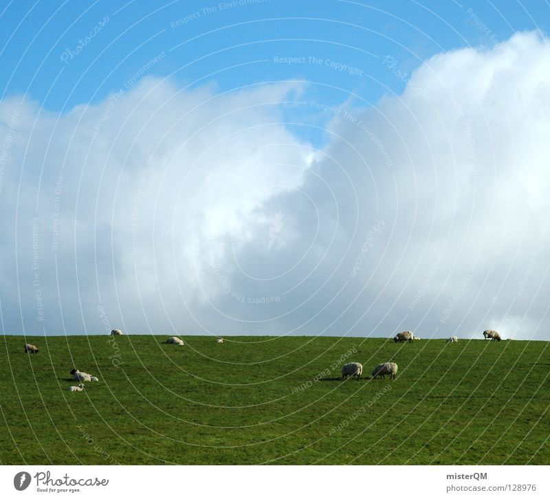 animal sky Sheep Grass Meadow Clouds Silhouette Sky Calm Peace Peace-loving Hazard-free To feed Romance Green White Gray Future Vantage point Ambiguous Animal