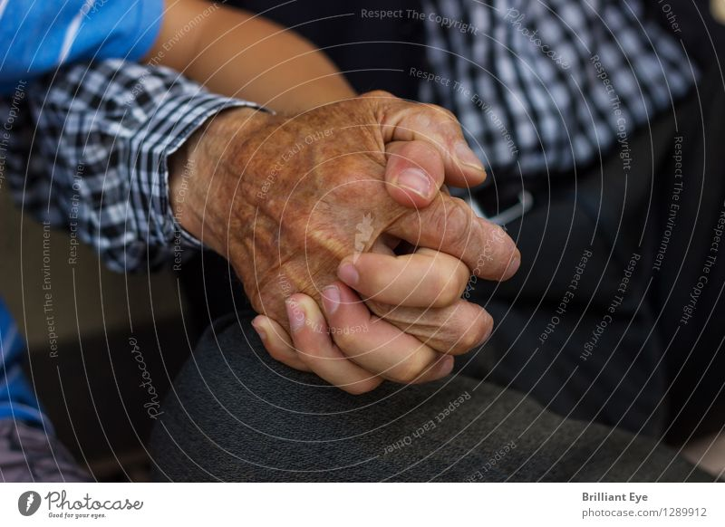 Old and young inseparable Summer Human being Child Boy (child) Male senior Man Grandparents Senior citizen Grandfather Family & Relations Hand Fingers