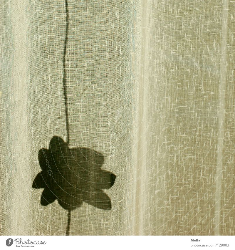 Summer casts its shadows ahead Curtain Drape Flower Blossom Shadow Folds Structures and shapes Undulating Wrinkles Hang Decoration Spring Silhouette Cloth