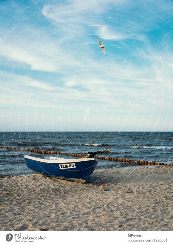 zempin Vacation & Travel Beach Ocean Environment Nature Landscape Sky Baltic Sea Watercraft Flying Maritime Blue Seagull Swell Colour photo Exterior shot