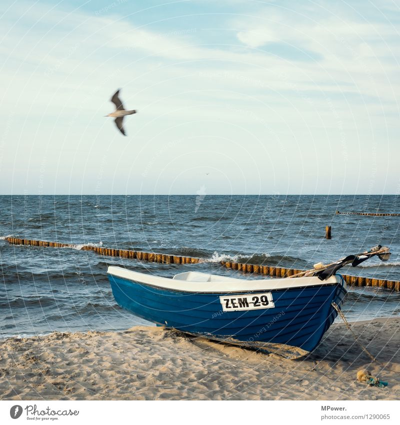 zempin Environment Landscape Nature Ocean Baltic Sea Vacation & Travel Watercraft Seagull Beach Sky Flying Blue Swell Colour photo Exterior shot Evening