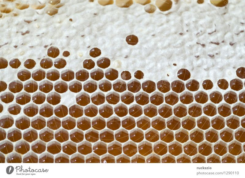Honeycombs, honeycombs, beeswax, wax, beehive Pet Bee Box Authentic Honey-comb Wax Beehive honey box honey room hive building honeybees Prey booty bee hives