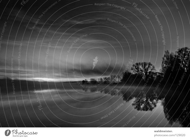 Black Morning Lake Fog Tree Twilight Morning fog Clouds Autumn Cold Calm Black & white photo Water Sky Dawn Feisneck Müritz National Park
