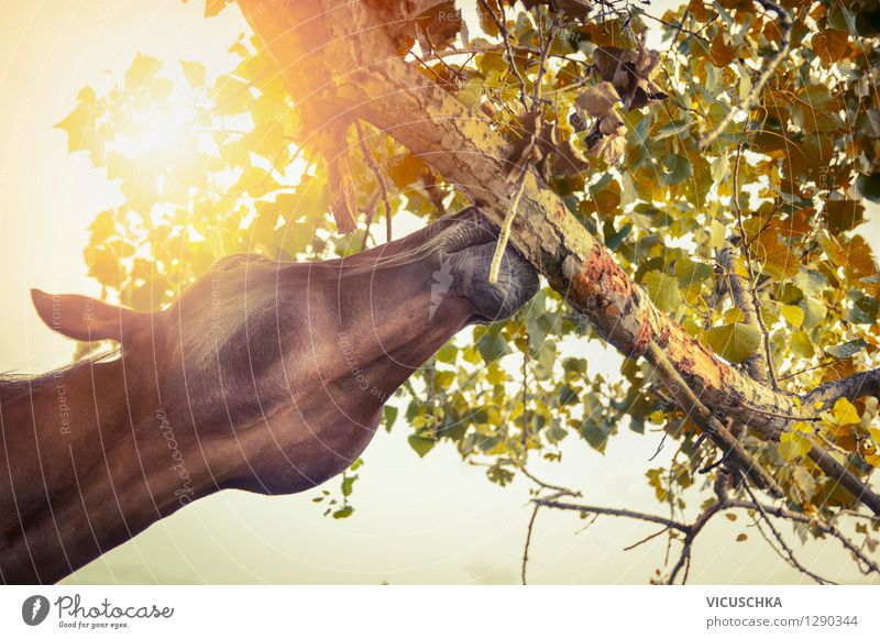 Nature Summer Sun Tree Leaf Animal Yellow Autumn Eating Lifestyle Design Branch Beautiful weather Horse Well-being Feed
