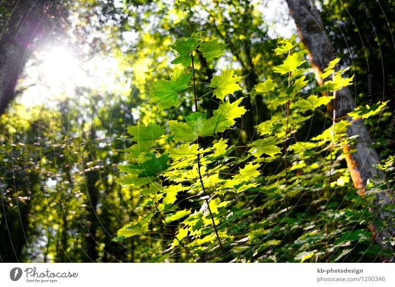 Green forest in autumn Summer Nature Landscape Autumn Park Forest trees case early autumn wood bole season morning sun leaves sunshine scene scenery environment