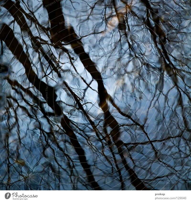 Sky Nature Blue Water Beautiful Tree Sun Leaf Forest Cold Clean Branch River Pure Damp Transparent