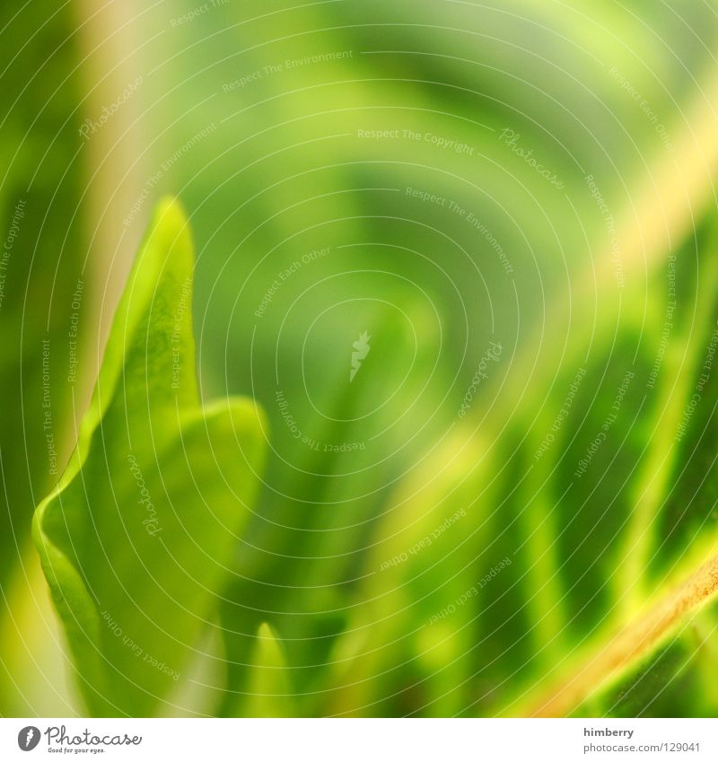 foliage III Green Florida Botany Virgin forest Background picture Park Vacation & Travel Fresh Vessel Color gradient Multicoloured Oxygen Lung
