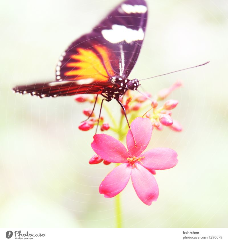 sniff Nature Plant Animal Flower Blossom Garden Park Meadow Wild animal Butterfly Animal face Wing 1 Observe Blossoming Fragrance Relaxation To hold on Flying